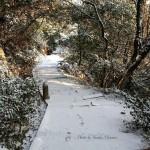 【雪道】 太子殿~珍しき雪の山道~/広島県福山市鞆の浦