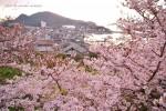 【福山市鞆の浦の桜】 2018おすすめ、お花見桜スポット~鞆の浦編~