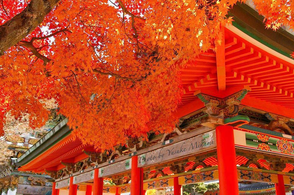 【しまなみの秋2017】 生口島にある耕三寺博物館の紅葉景色/広島県尾道市