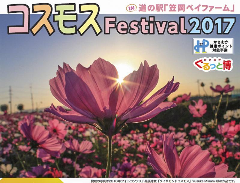 コスモスフェスティバル2017は10月8日開催!2017年、笠岡ベイファームのコスモスみごろはいつ?/岡山県笠岡市