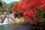 【三郎の滝2017】府中市の三郎の滝で紅葉が見ごろ!紅葉まつりは11月12日開催!/広島県府中市