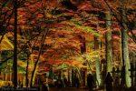 【佛通寺紅葉ライトアップ2018】三原市の紅葉名所、ライトアップされた紅葉景色はどんな感じ?/広島県三原市