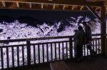 【筆影山の夜桜】三原市の花見おすすめスポット、ライトアップも!/広島県三原市