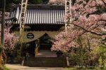【常国寺の桜】福山市熊野町の花見スポットはここがおすすめ!/広島県福山市