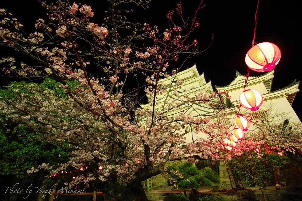 ライトアップされた福山城と桜、2019年の開花状況は?/広島県福山市