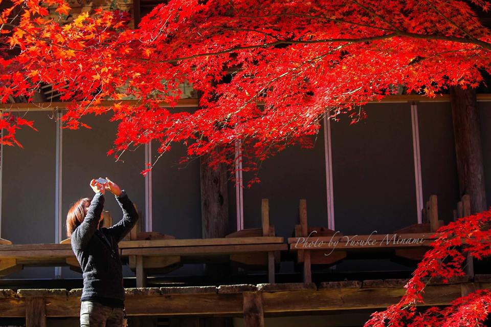 【御調八幡宮】三原市の紅葉と桜の名所!さらにはホタルも見れる!/広島県三原市
