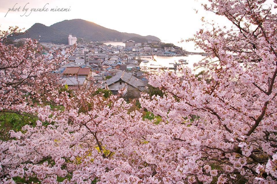 【福山市鞆の浦の桜】 2019おすすめ、お花見桜スポット~鞆の浦編~