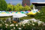 緑町公園~まもなく2016ばら祭り開催!!~