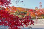 【神勝禅寺】秋におすすめ!福山市の紅葉スポットはここだ!/広島県福山市