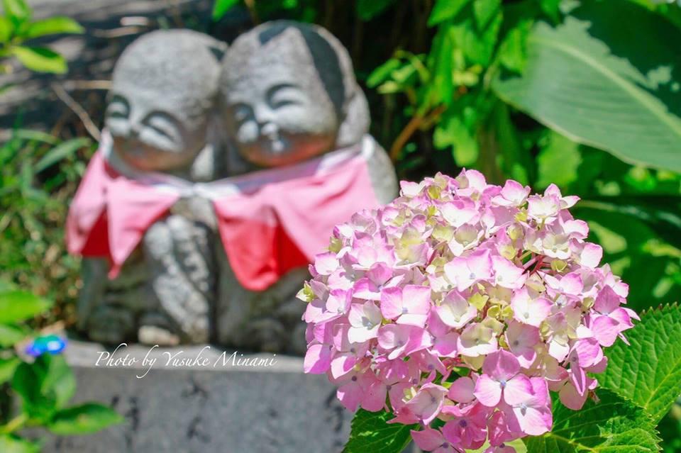 【あじさい祭り2017】府中市にある神宮寺は6月にあじさいが咲き誇る場所!!/広島県府中市