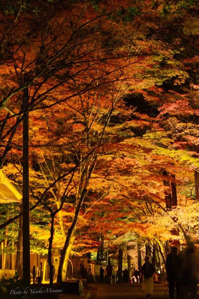 【佛通寺紅葉ライトアップ2019】三原市の紅葉名所、照らされた紅葉景色はどんな感じ?/広島県三原市