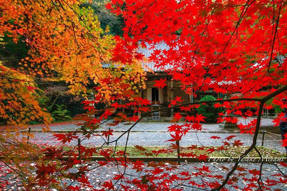 【世羅紅葉スポット】今高野山龍華寺、秋の紅葉景色はどんな感じ?/広島県世羅郡