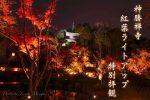 【福山市紅葉ライトアップ2020】神勝禅寺の特別拝観は11月の週末に開催!夜の紅葉景色はどんな感じ!?/広島県福山市