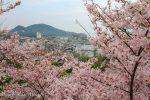 【2020鞆の浦桜名所8選】春のおすすめ、お花見桜名所をまとめて紹介!/広島県福山市