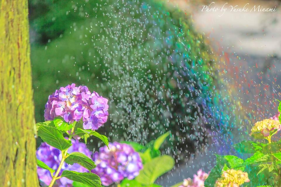 【三景園花まつり】あじさいの名所、三原市の中央森林公園!虹かかる紫陽花の景色にうっとり!/広島県三原市