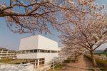 春の桜並木、広島県府中市こどもの国ポムポムで桜観賞!/広島県府中市