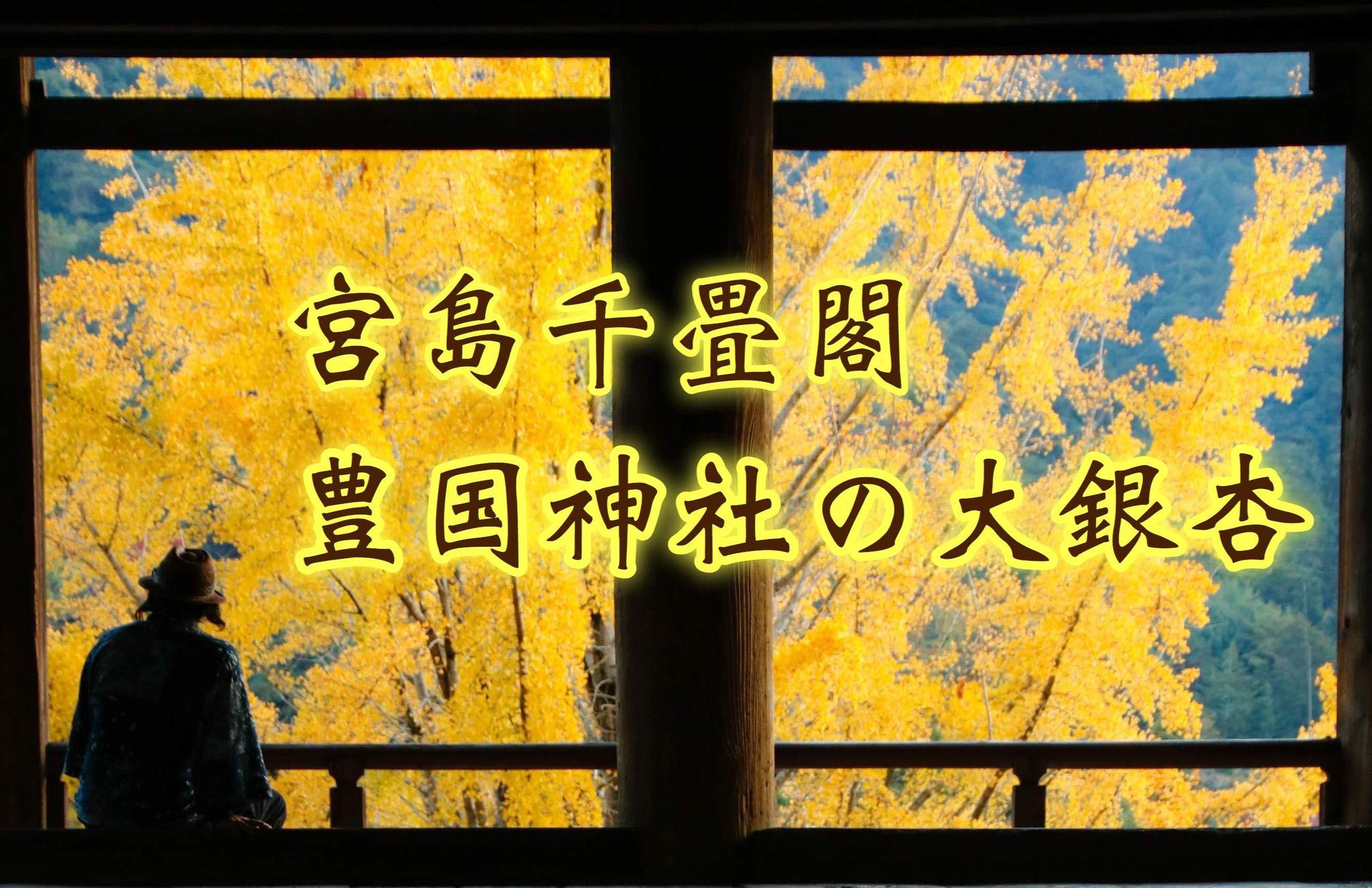【千畳閣のイチョウ】秋の宮島豊国神社で大銀杏が映える!!/広島県廿日市市