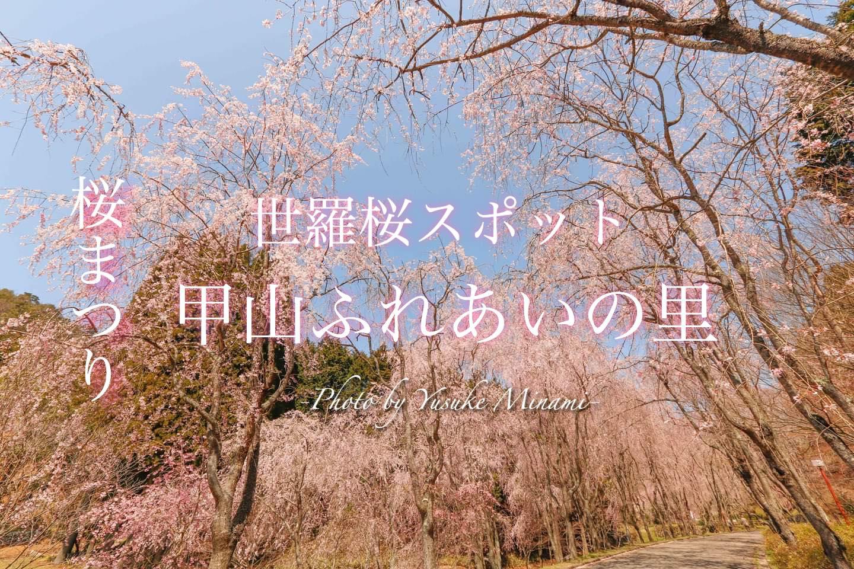 【甲山ふれあいの里】世羅の桜スポットで桜まつり!枝垂れ桜の桜並木がおすすめ!/広島県世羅郡